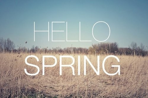 hello sping